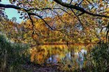 Clove Lakes Park in Autumn A