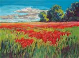 Countryside Poppies