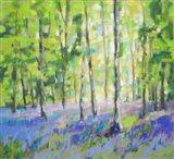Bluebell Woods III