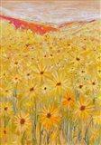 Spanish Sunflowers V