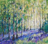 Bluebell Woods IV