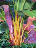 Palm Impression 1