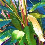 Palm Impressions B 8