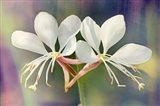 Floral Palette I