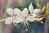 Floral Palette II