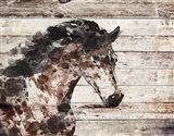 Running Wild Horse 10