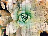 Succulent on Wood