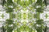 Natural Pattern 60