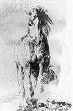 Wild Running Horse 3