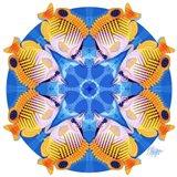 Butterfly Fish Scallop Mandala