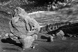Vermillion Cliffs National Monument Arizona