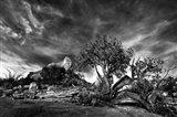 Sedona Juniper Tree 2