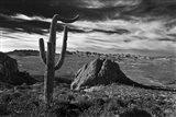 Saguaros Lost Dutchman State Park Arizona Superstition Mtns 2