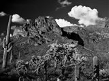 Saguaros Lost Dutchman State Park Arizona Superstition Mtns