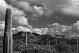 Arizona Superstition Mtns Saguaros 1