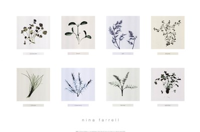 8 Herbs Poster by Nina Farrell for $31.25 CAD