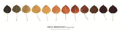Life Of A Leaf Poster by Owen Mortensen for $20.00 CAD