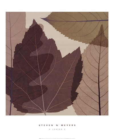 4 Leaves 2 Poster by Steven N. Meyers for $32.50 CAD