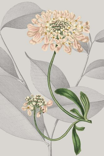 Botanical Arrangement I Poster by Vision Studio for $60.00 CAD