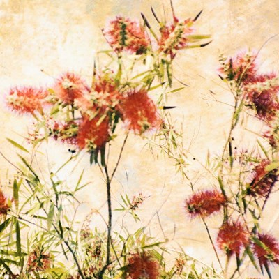 Bottle Brush II Poster by Skip Nall for $53.75 CAD