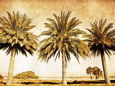 Palms on Brown II Poster by Skip Nall for $63.75 CAD