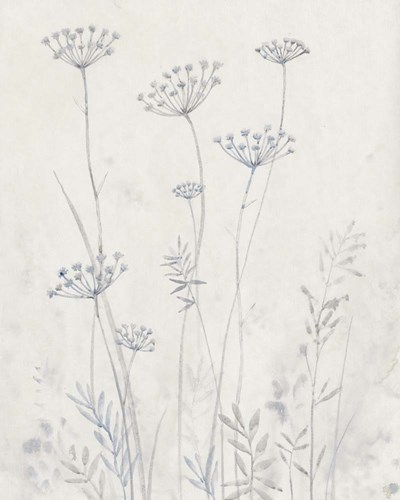 Neutral Queen Anne's Lace II Poster by Timothy O'Toole for $53.75 CAD