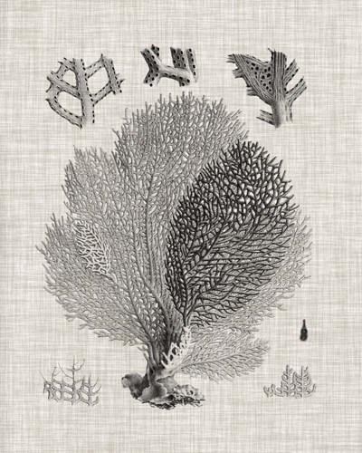 Coral Specimen VI Poster by Vision Studio for $53.75 CAD
