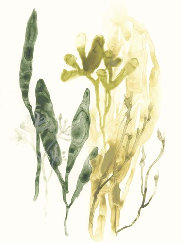 Kelp Collection VI Poster by June Erica Vess for $63.75 CAD