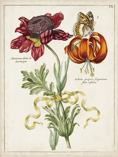 Botanical Bouquet II Poster by Unknown for $38.75 CAD