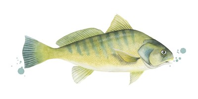 Chromatic Catch I Poster by Grace Popp for $50.00 CAD