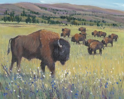 Animals of the West I Poster by Timothy O'Toole for $53.75 CAD