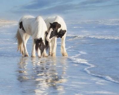 Water Horses I Poster by PHBurchett for $37.50 CAD