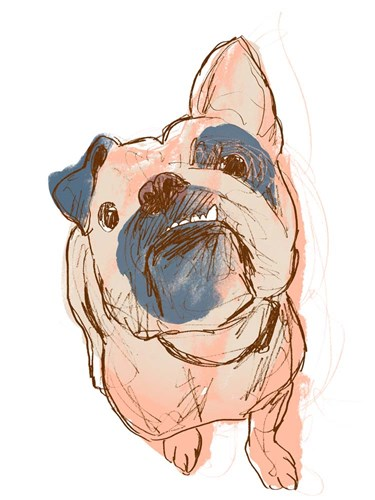Dog Portrait--Bobo Poster by June Erica Vess for $38.75 CAD