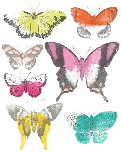 Chromatic Butterflies II Poster by June Erica Vess for $53.75 CAD