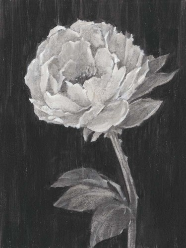 Black and White Flowers II Poster by Ethan Harper for $38.75 CAD