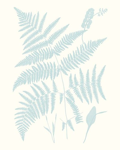 Serene Ferns I Poster by Vision Studio for $53.75 CAD