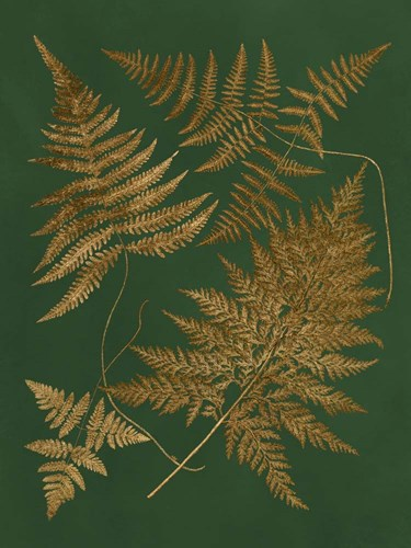 Gilded Ferns II Poster by Vision Studio for $38.75 CAD