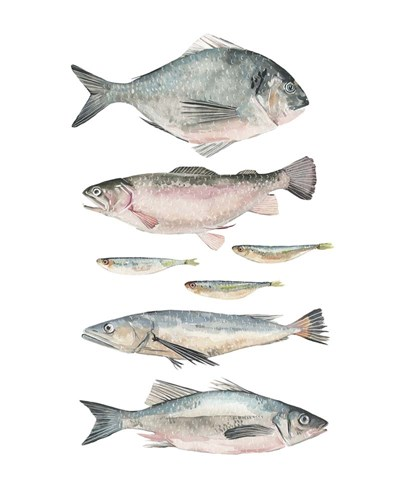 Fish Composition II Poster by Emma Scarvey for $53.75 CAD