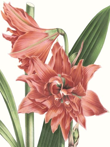 Floral Beauty VII Poster by Vision Studio for $38.75 CAD