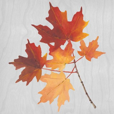 Autumn Leaves IV Poster by Dianne Miller for $46.25 CAD