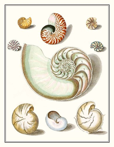 Collected Shells II Poster by Vision Studio for $46.25 CAD