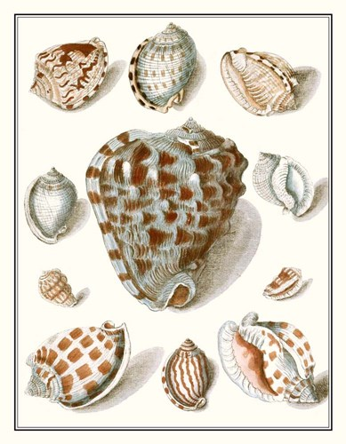 Collected Shells VIII Poster by Vision Studio for $46.25 CAD