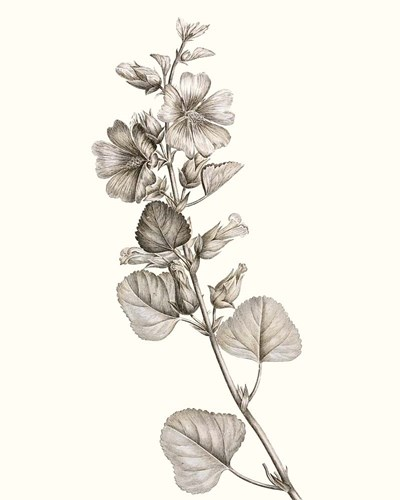 Neutral Botanical Study I Poster by Vision Studio for $52.50 CAD
