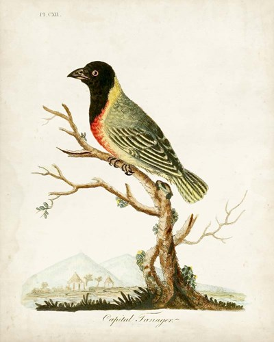 Capital Tanager Poster by John Latham for $53.75 CAD