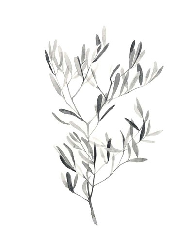 Paynes Grey Botanicals IV Poster by Emma Scarvey for $53.75 CAD