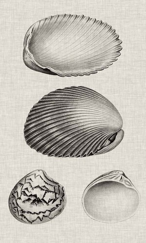 Charcoal & Linen Shells VIII Poster by Vision Studio for $43.75 CAD