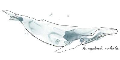 Cetacea Humpback Poster by June Erica Vess for $50.00 CAD