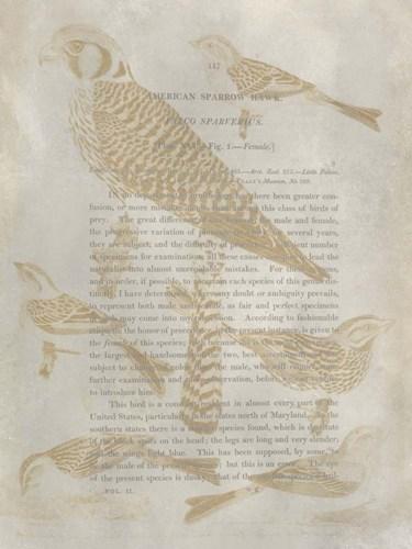 Ornithology Impressions V Poster by Alexander Wilson for $38.75 CAD