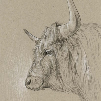 Bison Sketch II Poster by Melissa Wang for $52.50 CAD