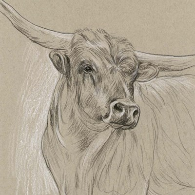 Longhorn Sketch I Poster by Melissa Wang for $52.50 CAD